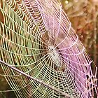 UV Spider Web by Heather Samsa