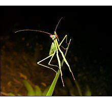 Mr Mantis Photographic Print