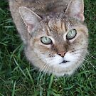 Purrfect Cat by Marilyn Bell