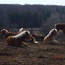 Horses at Rest by Marilyn Bell