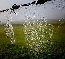 Spiders Lair by Kym Howard