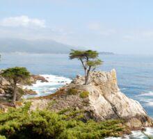 Lone Cypress, California Sticker