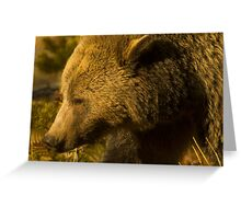 Grizzly Sow-Signed-4855 Greeting Card