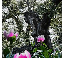 Wild peonies at the feet of a cork tree by Wendy  Rauw