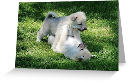 Playful Puppies Wrestling by AnnDixon