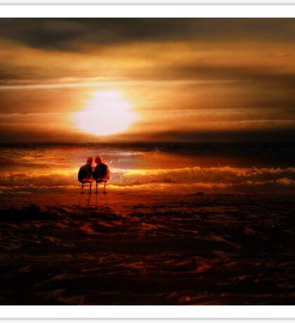 Seagulls - Lovebirds at Sunset  Sticker