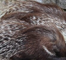 porcupine sleeping Sticker