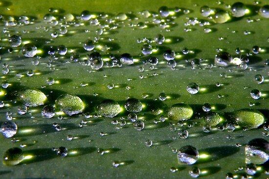 Rain Drops by Rocksygal52