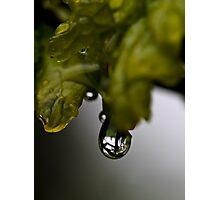 Natural Lens Photographic Print