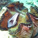 CLAM MOUTH - GIANT CLAM by springs