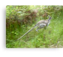 Leaping Kangaroo, Metal Print