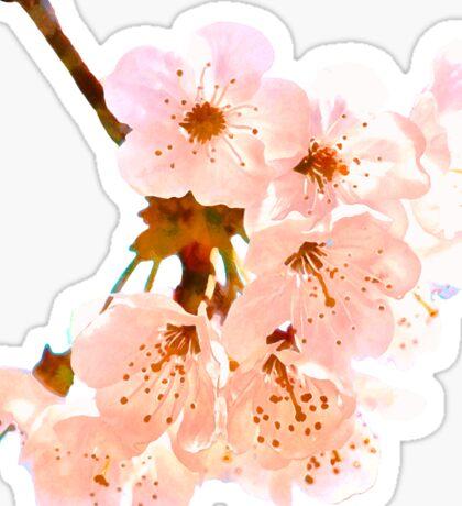 Cherry blossom Sticker