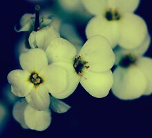 softly Blossoms by RosiLorz