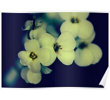 softly Blossoms Poster