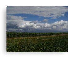 Cornfield right in the middle of L.A. Canvas Print