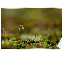Microscopic Moss Poster