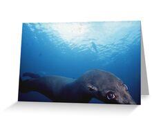 Mexican Fur Seals Greeting Card