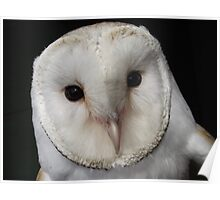 Boogie the Barn Owl Poster