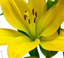 Yellow Lily  Sticker