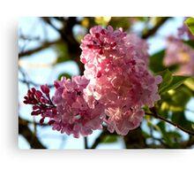 Sunny Lilac Canvas Print