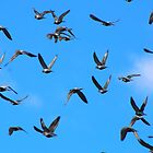 """Genesis 1:20  And God said, """"Let the waters swarm with swarms of living creatures, and let birds fly above the earth across the expanse of the heavens."""" by Laurie Puglia"""