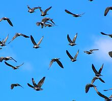 "Genesis 1:20  And God said, ""Let the waters swarm with swarms of living creatures, and let birds fly above the earth across the expanse of the heavens."" by Laurie Puglia"
