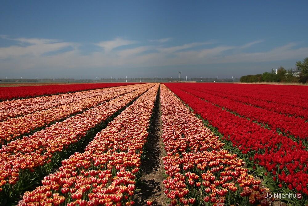 Tulip Field in Spring by Jo Nijenhuis