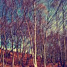 Silver Birch by Karen  Betts