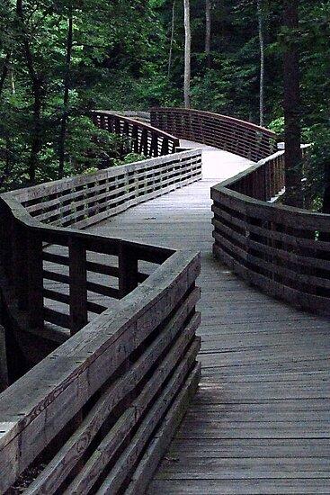 Boardwalk zigzag by Rogere0829