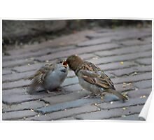 Sparrow baby Poster