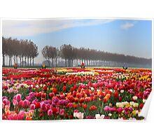 Show Garden Tulip Festival Poster
