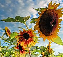 Sunflowers by T.J. Martin