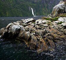 Milford Sound, Fur Seals by Michael Treloar