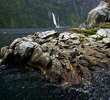 Milford Sound, Fur Seals by Michael Treloar