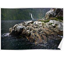 Milford Sound, Fur Seals Poster