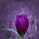 A Friend is Like a Flower... by aprilann