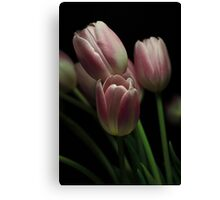 Silky Pink Canvas Print
