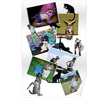 Collage of  Cat Photographs  Poster