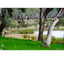 Water hole in the forest Photographic Print