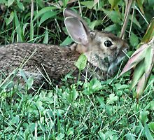 Bunny in the backyard by vigor