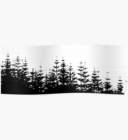 Norfolk Pine Poster