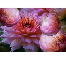 Blooms and bubbles abound!   Photographic Print