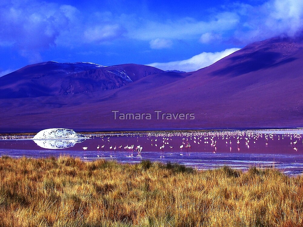 Flamingo Paradise by Tamara Travers