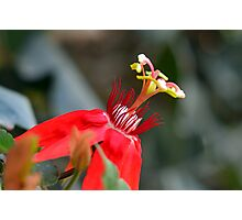 Exotic Flower Photographic Print
