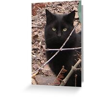 Cats, kittens Greeting Card