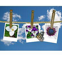Nature's Laundry Photographic Print