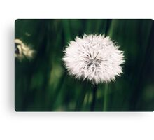 It was a special day Canvas Print