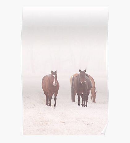 Equine Frost Poster