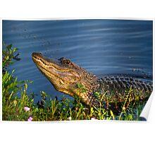 Alligator Grunt Poster
