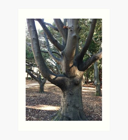 Berkeley tree Art Print